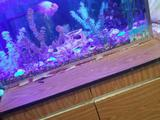 Продам аквариум 17000